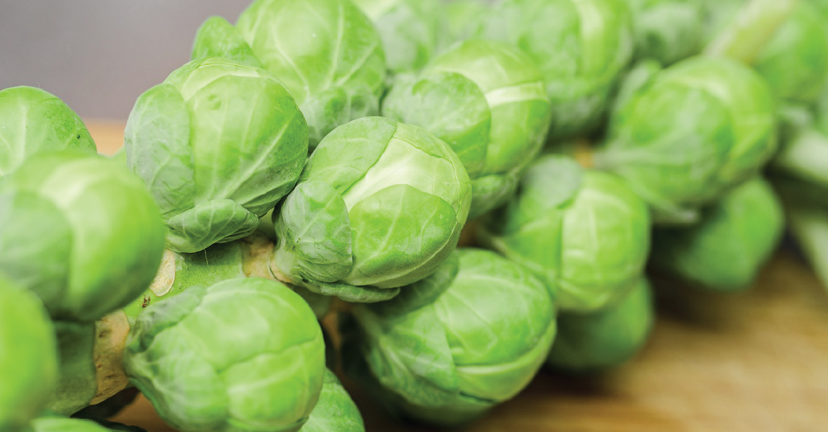 Brussel Sprout กะหล่ำดาว ในงานเทศกาล